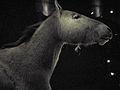 Equus przewalskii 01 by Line1.JPG