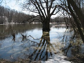 Eramosa River in Guelph Ontario early spring.jpg