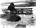 Eskimo woman cutting walrus blubber from hide with an ulu, Cape Prince of Wales, Alaska, between 1901 and 1906 (AL+CA 2176).jpg