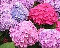 FLOWERS - panoramio.jpg