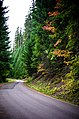 Fall Color along Road-Mt Hood (29491733983).jpg
