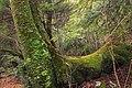 Fall Creek (Revisited) (22) (11659573783).jpg