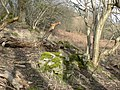Fallen boughs, moss covered rock and a patch of bracken at Cwm Afon. - geograph.org.uk - 1203687.jpg