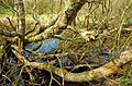 Fallen tree by the Quoile - geograph.org.uk - 750227.jpg