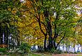 Farben des Sauerlandes beim Herbstbeginn im Ebbegebirge (15059468909).jpg