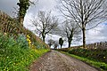 Farm lane and daffodils - Pontyates - geograph.org.uk - 1243717.jpg