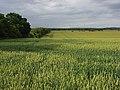 Farmland, Perham Down - geograph.org.uk - 479993.jpg