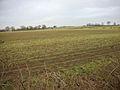 Farmland - geograph.org.uk - 93597.jpg