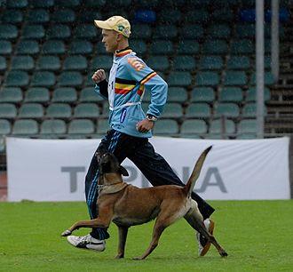 Schutzhund - The Obedience Phase in Schutzhund at 2010 FCI World Championship Finland