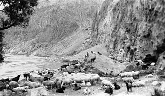 Fen River - A herd of sheep on the bank of Fen River 20 kilometers to the north of Taiyuan in 1924.