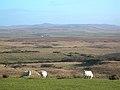 Field and Moor - geograph.org.uk - 349872.jpg