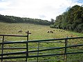 Field of sheep, looking south - geograph.org.uk - 70503.jpg