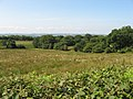 Fields near Pentyrch - geograph.org.uk - 2486706.jpg