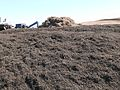 Finished Municipal Compost for Resale at Recology's Facility.jpg