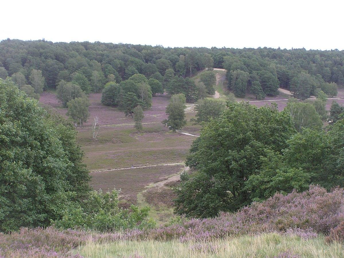 Singletrail Harburg Hills