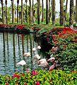 Flamingo Siesta, Palm Desert, CA 2-14 (27405407432).jpg