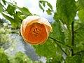 Fleur de pontivy - panoramio.jpg