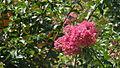Fleur japonaise.JPG
