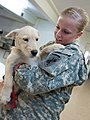 Flickr - DVIDSHUB - Army Reserve civil affairs soldiers extend helping hands to furry friends (Image 5 of 6).jpg