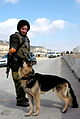 Flickr - Israel Defense Forces - Oketz Soldier Feeds Her Dog Hanukkah Treats.jpg