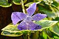 Flor en Hacienda Sta. Bárbara (4083695670).jpg
