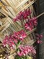 Flora of Tanzania 0152 Nevit.jpg