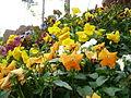 Flores en cantero.jpg