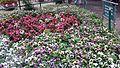 Flower deck.jpg