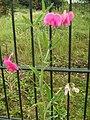 Flowers - panoramio (40).jpg