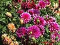 Flowers in Garden - Agra Fort - Agra - Uttar Pradesh - India - 02 (12613107114).jpg