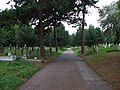 Footpath in the graveyard - geograph.org.uk - 1443404.jpg