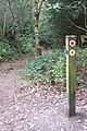 Footpath junction in Scords Wood (2) - geograph.org.uk - 1536461.jpg