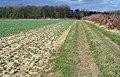 Footpath to Folly Wood - geograph.org.uk - 800503.jpg