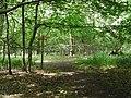 Footpaths in Graylands Plantation - geograph.org.uk - 643380.jpg