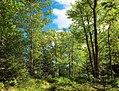 Forest Buffer (9456632000).jpg