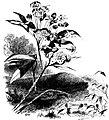Forest Hymn pg 23b.jpg