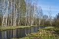 Forest near Olgino 2020-05-08-6.jpg