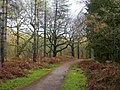 Forest of Dean - geograph.org.uk - 1629439.jpg