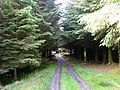 Forest path - geograph.org.uk - 455333.jpg
