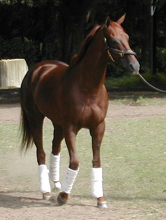 Funny Cide - Image: Funny alone
