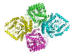 Glutamatcysteinligase (E. coli K12)