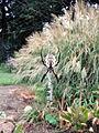 GardenSpider.JPG