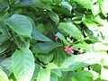 Gardenology.org-IMG 0651 rbgs10dec.jpg
