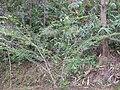 Gardenology.org-IMG 7341 qsbg11mar.jpg