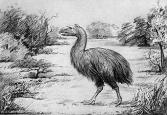 Gastornis - Life restoration of G. steini (now G. gigantea) with outdated, ratite-like plumage, 1917