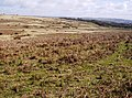 Gelligaer Common - geograph.org.uk - 735960.jpg