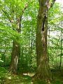 Gießen-Wieseck, Adam und Eva 02.jpg