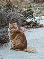 Gillie Outdoors - Flickr - photofarmer.jpg