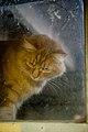 Gillie under the porch (3177159104).jpg