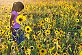 Girl Walking in Sunflowers, Great Sand Dunes National Park -2 (12660702644).jpg